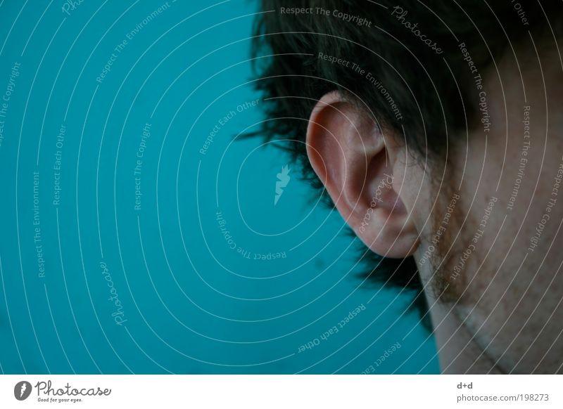 @ maskulin Ohr brünett Backenbart hören türkis Haare & Frisuren Barthaare Ohrmuschel Ohrläppchen Textfreiraum links Farbe Tiefenschärfe Wange Ton Klang Geräusch