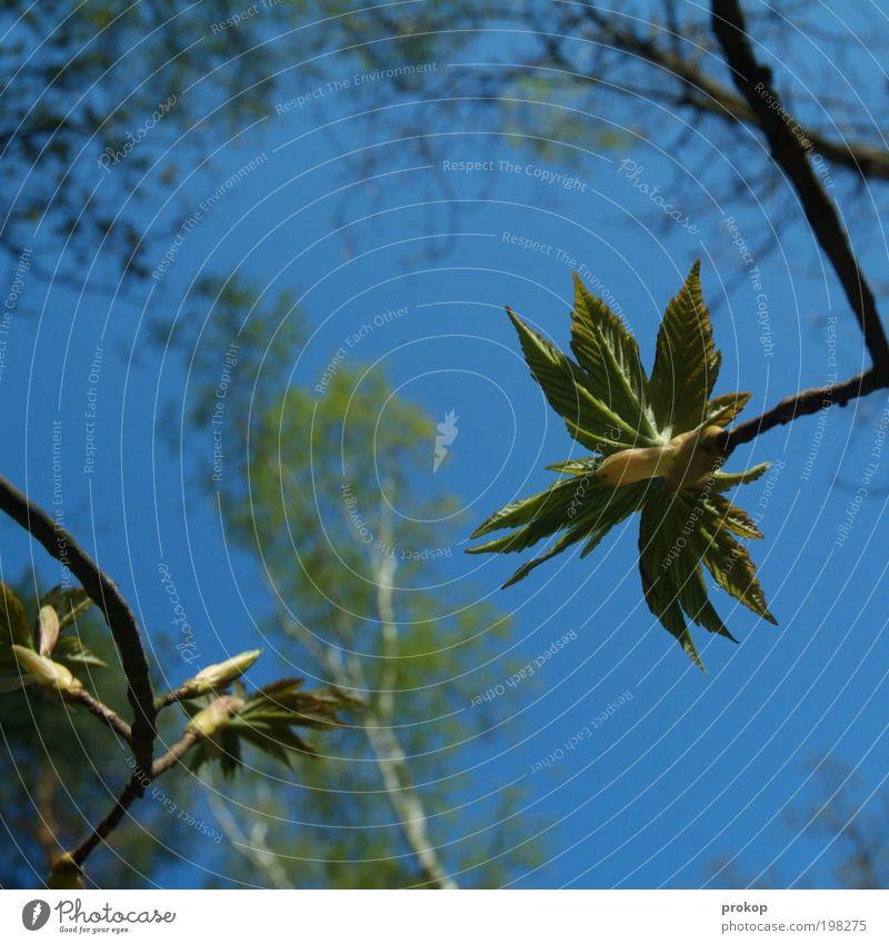 Spiel über Bande Umwelt Natur Landschaft Pflanze Himmel Wolkenloser Himmel Frühling Sommer Klima Wetter Schönes Wetter Baum Blatt Grünpflanze Wildpflanze Wald