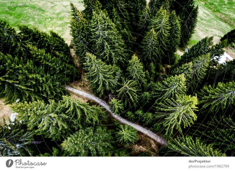 Ein Weg – ein Wäldchen Natur Ferien & Urlaub & Reisen Pflanze Baum Landschaft Tier Freude Wald Berge u. Gebirge Umwelt Frühling Freiheit Tourismus fliegen