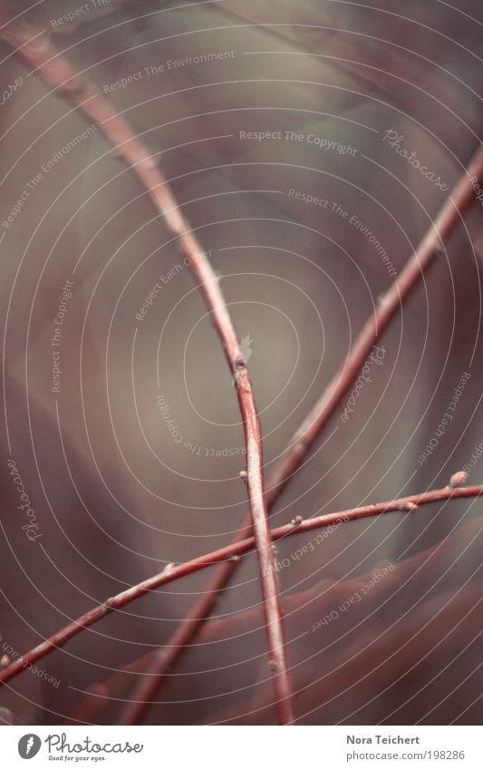 * Umwelt Natur Landschaft Pflanze Tier Frühling Sommer Baum Sträucher Zweig Ast Park Blühend Wachstum ästhetisch außergewöhnlich neu schön violett Glück