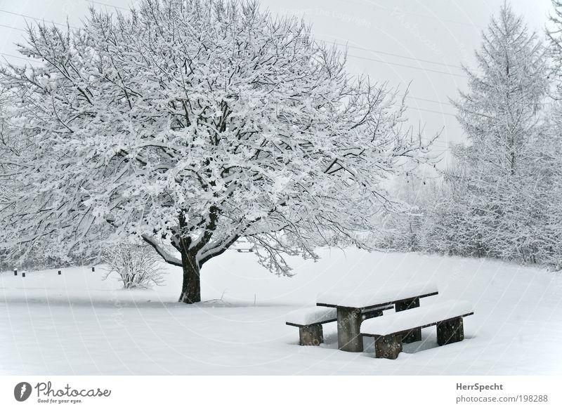Picknik-Area Umwelt Natur Landschaft Winter Eis Frost Schnee Baum Sträucher Wiese Wald weiß Bank Tisch Schneedecke Farbfoto Gedeckte Farben Außenaufnahme