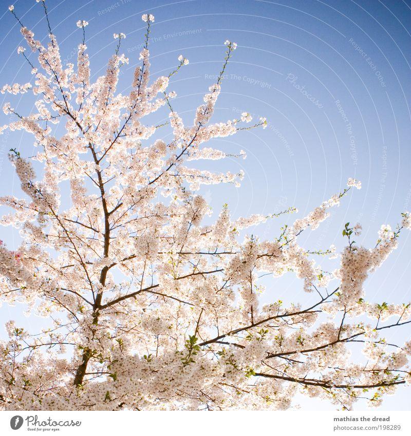 ERWACHEN Natur schön Himmel weiß Baum Pflanze Leben Erholung Blüte Frühling Park Landschaft Zufriedenheit Umwelt Frucht ästhetisch