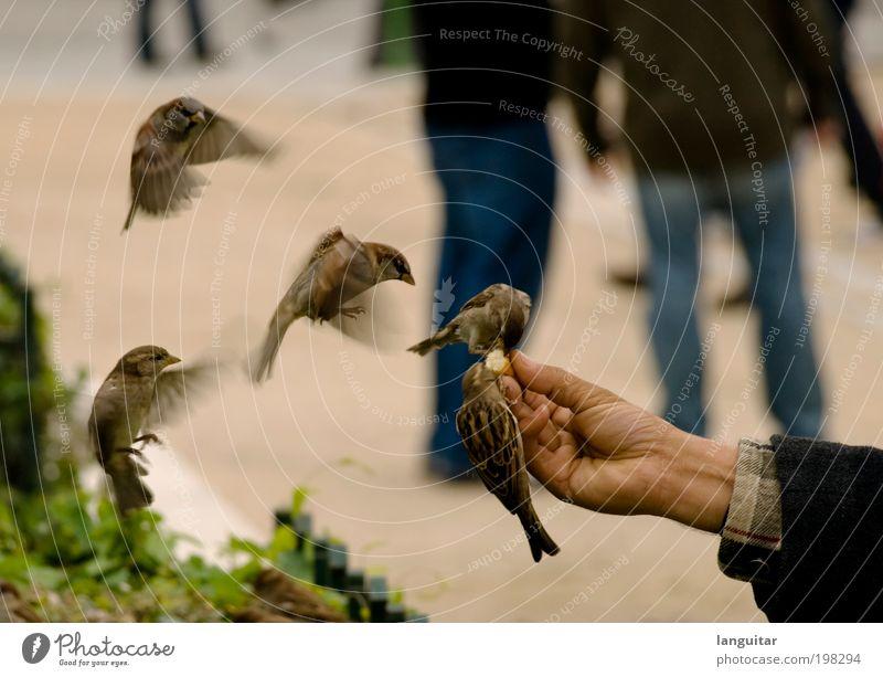 Feeding Time Hand Vogel fliegen mehrere frei Geschwindigkeit Finger Flügel niedlich berühren Fressen frech ködern Mensch füttern fliegend