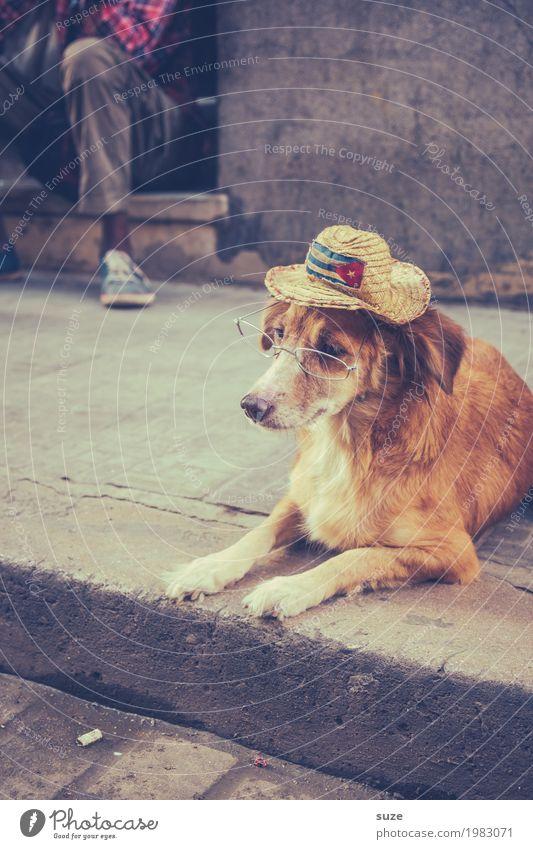 Alter Hase Zufriedenheit ruhig Ferien & Urlaub & Reisen Städtereise Senior Leben Kultur Wege & Pfade Brille Hut Haustier Hund 1 Tier liegen alt Armut dreckig