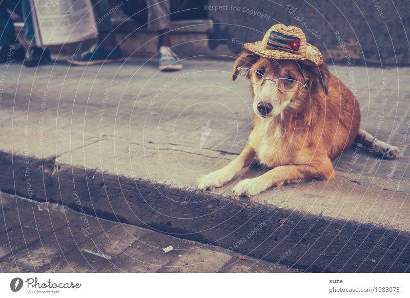 Erzähl mir was Neues Zufriedenheit ruhig Ferien & Urlaub & Reisen Städtereise Senior Kultur Tier Wege & Pfade Brille Hut Haustier Hund 1 alt Armut dreckig
