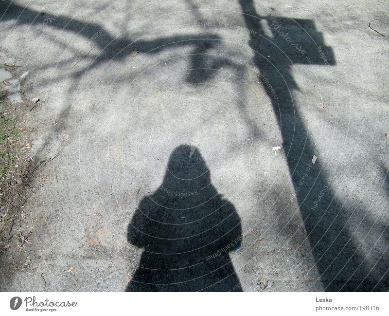 Unter der Laterne Mensch Baum Einsamkeit ruhig Straße Stimmung Schönes Wetter Wegweiser Verkehrsschild Heimweh Verkehrszeichen Hemmung Verschwiegenheit