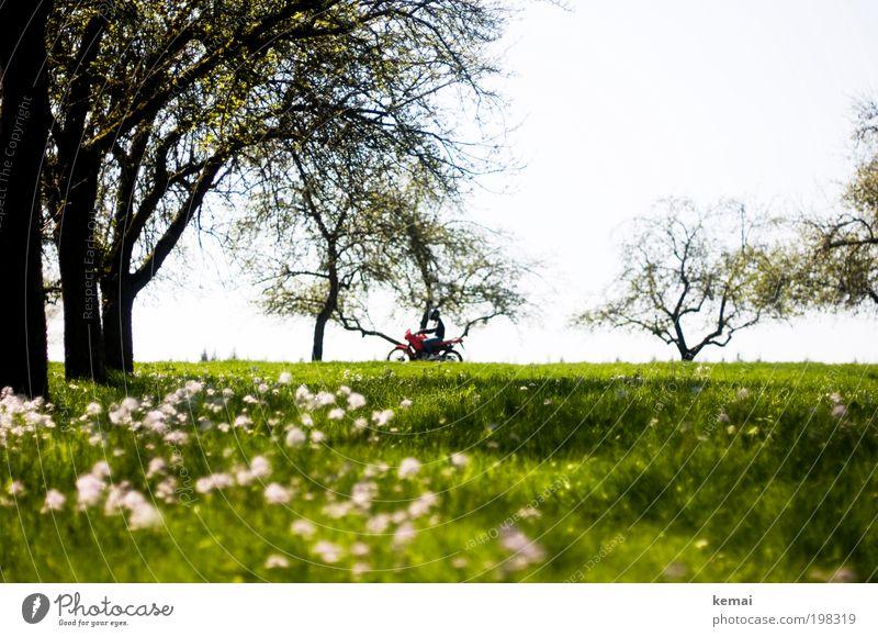 Sonntagsausfahrt Natur Baum Blume grün Pflanze Sommer Freude Straße Wiese Blüte Gras Frühling Wärme Landschaft Straßenverkehr Umwelt