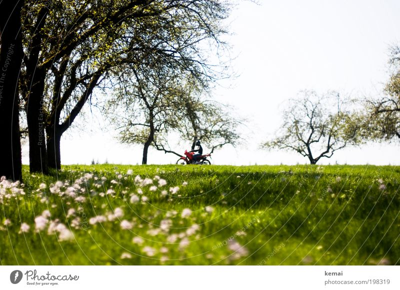 Sonntagsausfahrt Umwelt Natur Landschaft Pflanze Frühling Sommer Schönes Wetter Wärme Baum Blume Gras Blüte Grünpflanze Wiese Verkehr Verkehrsmittel