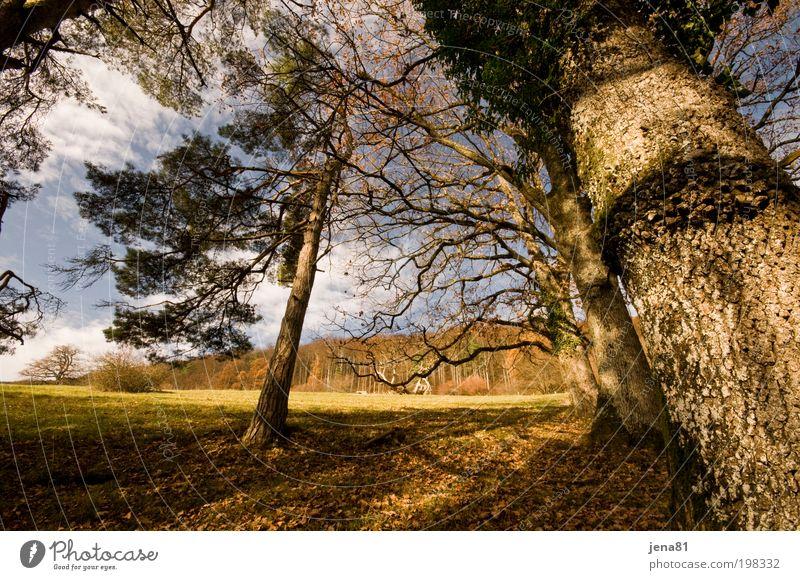 Herbsteichen ruhig Ausflug Sonne Umwelt Natur Landschaft Pflanze Erde Luft Himmel Sonnenlicht Schönes Wetter Baum Wald Hügel Menschenleer authentisch natürlich