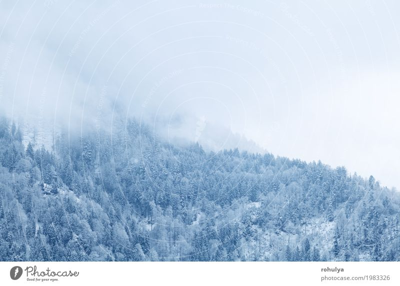 Winterbergwald im Nebel, Alpen, Deutschland Natur Ferien & Urlaub & Reisen weiß Landschaft Wald Berge u. Gebirge Schnee Schneefall Wetter Eis Aussicht Frost