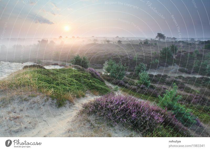 blühende Sommerwiesen bei Sonnenaufgang Natur Landschaft Sand Himmel Sonnenuntergang Sonnenlicht Schönes Wetter Nebel Blume Blüte Wiese Hügel wild grün rosa