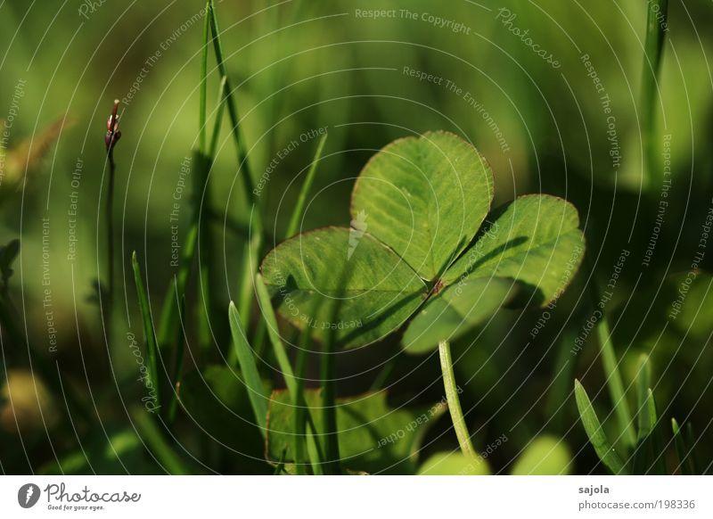 viel glück jo Umwelt Natur Pflanze Gras Kleeblatt ästhetisch grün Glück Glücksbringer Glücksklee vierblättrig Schatten Glückwünsche Naturliebe Farbfoto