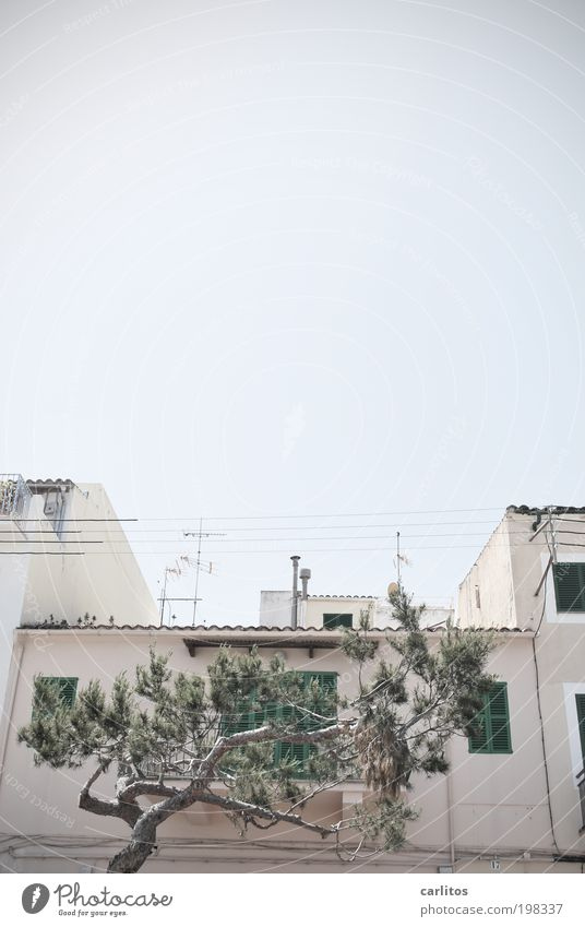 Dieses Bild ist ja das LETZTE !! Himmel Sommer Schönes Wetter Wärme Baum Pinie Kleinstadt Haus Fassade Fenster Dach alt Häusliches Leben authentisch eckig
