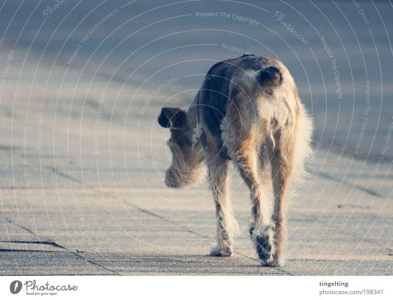 sings the blues Stadt Straße Wege & Pfade Tier Haustier Hund 1 Bewegung gehen einfach trist blau braun gelb grau Gefühle Stimmung friedlich Langeweile