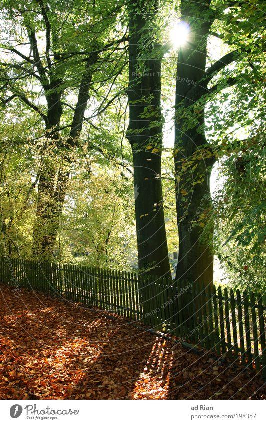 der nächste Herbst Joggen Natur Sonne Sonnenlicht Wärme Baum Sträucher Moos Grünpflanze Garten Park Wald genießen leuchten natürlich Gelassenheit ruhig Ende