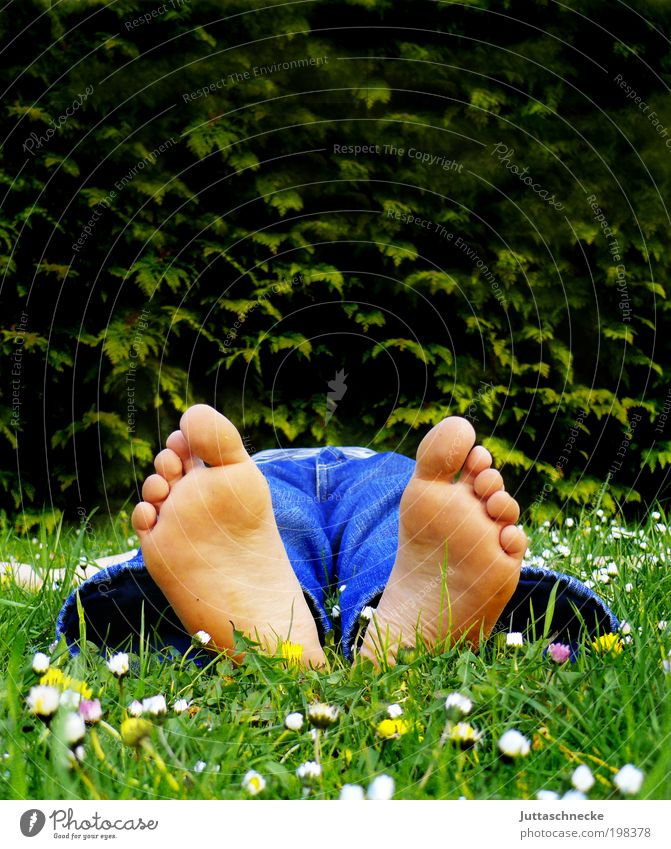 Fussi Mensch Ferien & Urlaub & Reisen ruhig Erholung Leben Gras Fuß Kindheit Zufriedenheit Freizeit & Hobby maskulin liegen schlafen Blühend Wohlgefühl Gänseblümchen