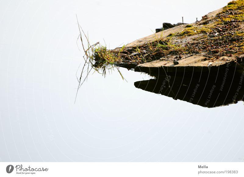 Fern oder nah? Klein oder groß? Oben oder unten? Umwelt Natur Wasser Gras Moos Teich See Holz Ferne hell klein oben Stimmung ruhig Erholung geheimnisvoll Idylle