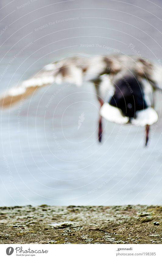 Abflug Natur Tier Umwelt Bewegung springen Vogel Kraft fliegen Wildtier gefährlich Zukunft Europa Flügel Hafen Mobilität Ente
