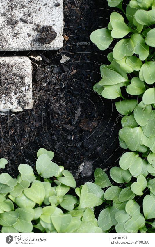 Tetris Natur Landschaft Pflanze Frühling Gras Moos Farn Grünpflanze Nutzpflanze Bodenbelag Erde Gewächshaus Stein diszipliniert Ordnungsliebe Genauigkeit