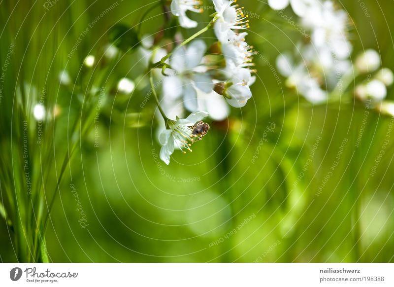 Frühlingsblumen Natur schön weiß Blume grün Pflanze Wiese Blüte Gras Frühling Garten Park Umwelt Fröhlichkeit ästhetisch rein