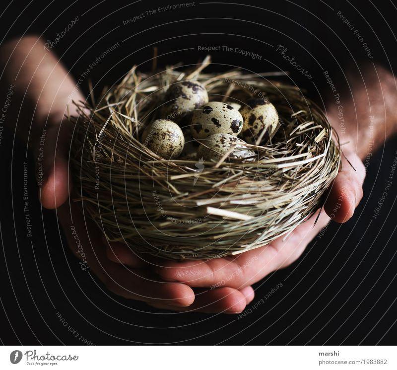 ausbrüten Mensch 1 Gefühle Stimmung Nest Brutpflege Horst Ei Eierschale Vogeleier Bogenschütze Schutz festhalten Ostern Osternest Hand Umweltschutz Tierschutz