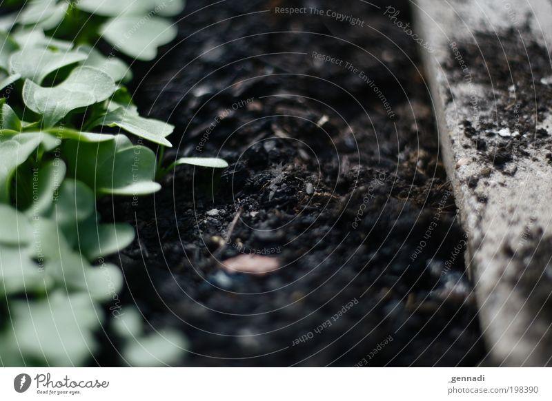 Grenzgebiet Natur grün Pflanze schwarz Frühling Garten Wege & Pfade Erde nah dünn Unendlichkeit Grenze Urelemente Weisheit Grünpflanze Gewächshaus