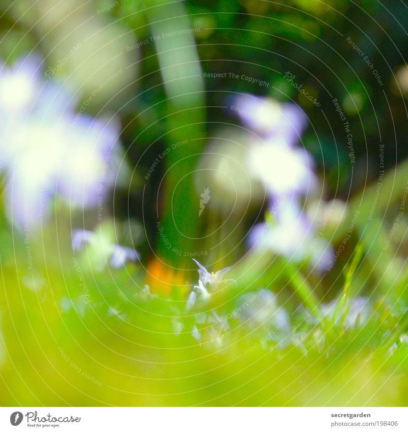 5 dioptrin. Sommerurlaub Gartenarbeit Umwelt Natur Pflanze Frühling Gras Blüte Park Wiese Blühend blau grün rot Frühlingsgefühle Perspektive Gartenfest