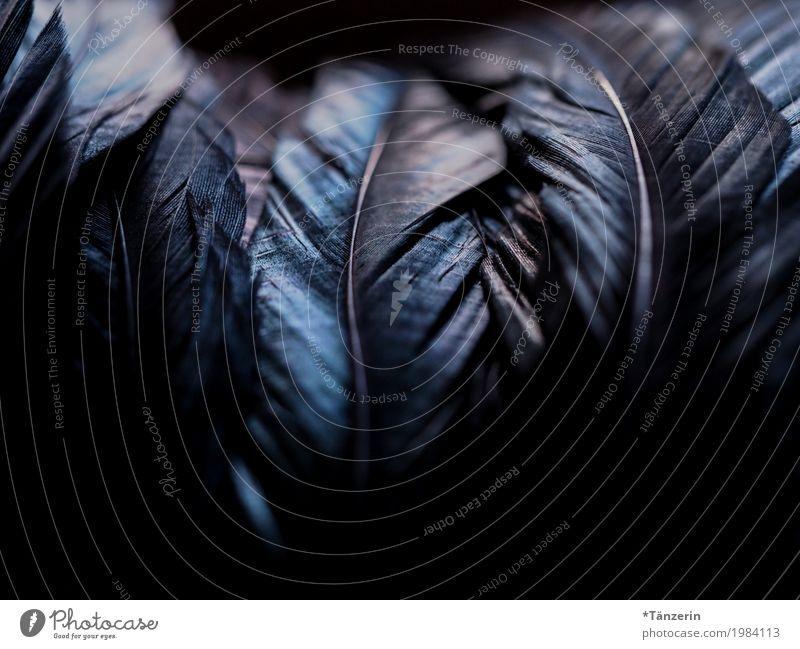 shades of black Vogel Flügel Feder außergewöhnlich dunkel glänzend gruselig schön blau schwarz silber Farbfoto Gedeckte Farben Nahaufnahme Makroaufnahme