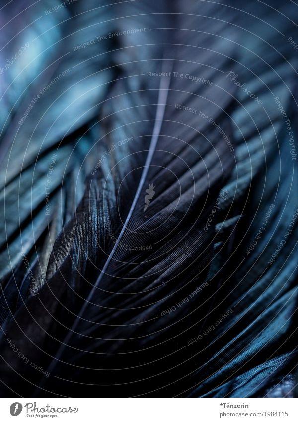 schillernd Flügel Feder ästhetisch achtsam ruhig Farbfoto Gedeckte Farben Makroaufnahme Menschenleer Abend Nacht Reflexion & Spiegelung Unschärfe