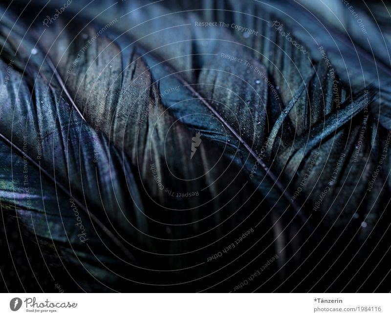 schillernd Flügel Feder ästhetisch dunkel blau schwarz silber Farbfoto Gedeckte Farben Makroaufnahme Menschenleer Nacht Reflexion & Spiegelung Unschärfe