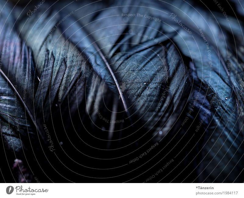 schillernd Flügel Feder natürlich blau violett schwarz Farbfoto Gedeckte Farben Makroaufnahme Menschenleer Nacht Unschärfe Schwache Tiefenschärfe