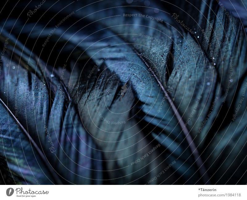 Federn Flügel ästhetisch dunkel blau schwarz Farbfoto Gedeckte Farben Detailaufnahme Makroaufnahme Menschenleer Unschärfe Schwache Tiefenschärfe