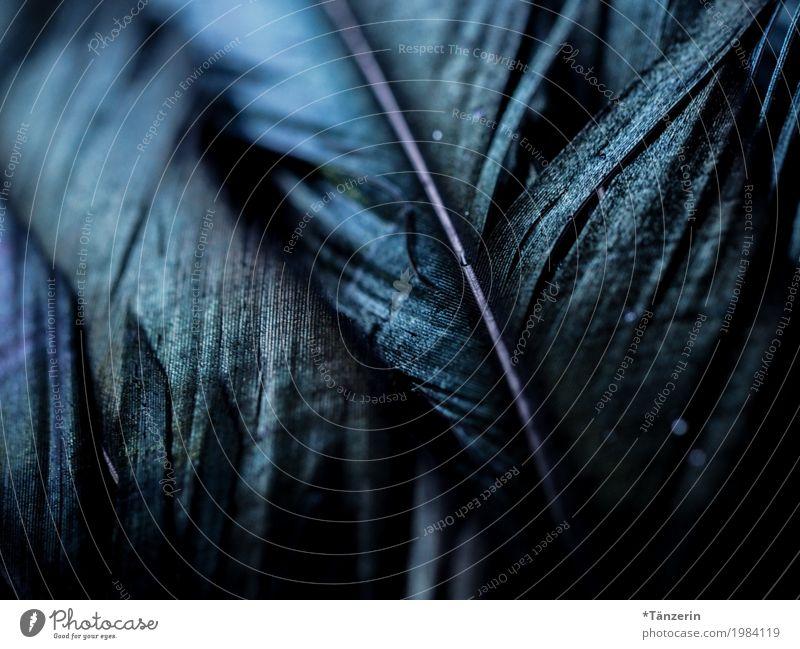 Federn ästhetisch dunkel natürlich schön blau Farbfoto Gedeckte Farben Detailaufnahme Makroaufnahme Menschenleer Unschärfe Schwache Tiefenschärfe
