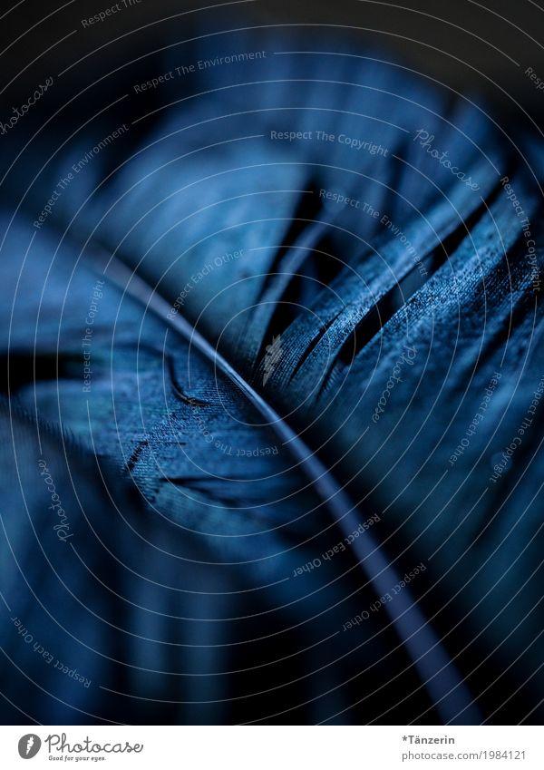 shades of black Vogel Flügel Feder ästhetisch natürlich schön blau schwarz Farbfoto Gedeckte Farben Nahaufnahme Menschenleer Abend Nacht Low Key Unschärfe