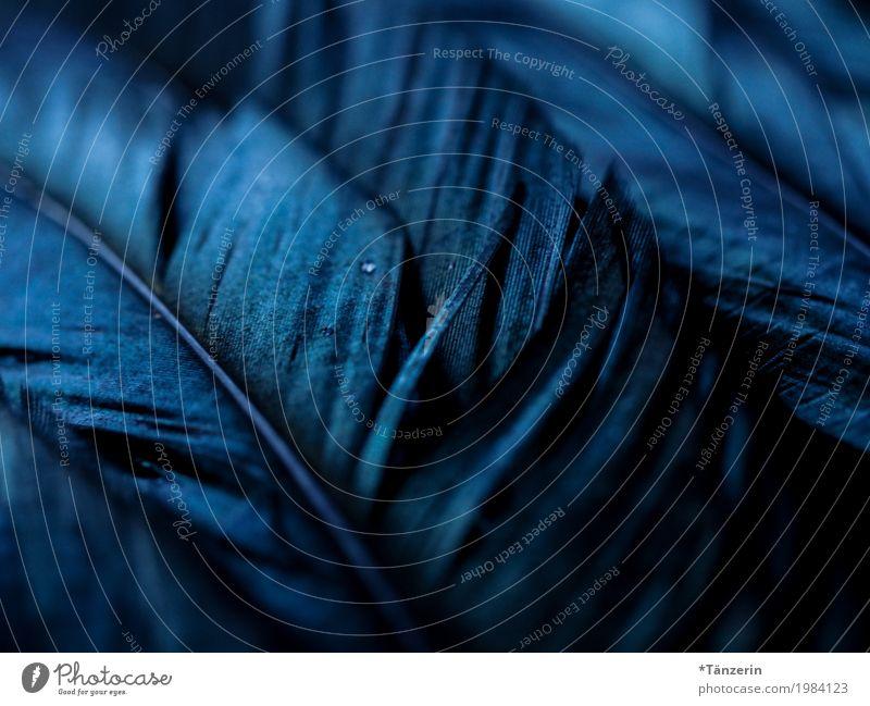 shades of black Tier Vogel Feder ästhetisch schön blau grau schwarz silber ruhig Farbfoto Gedeckte Farben Strukturen & Formen Menschenleer Abend Nacht Unschärfe