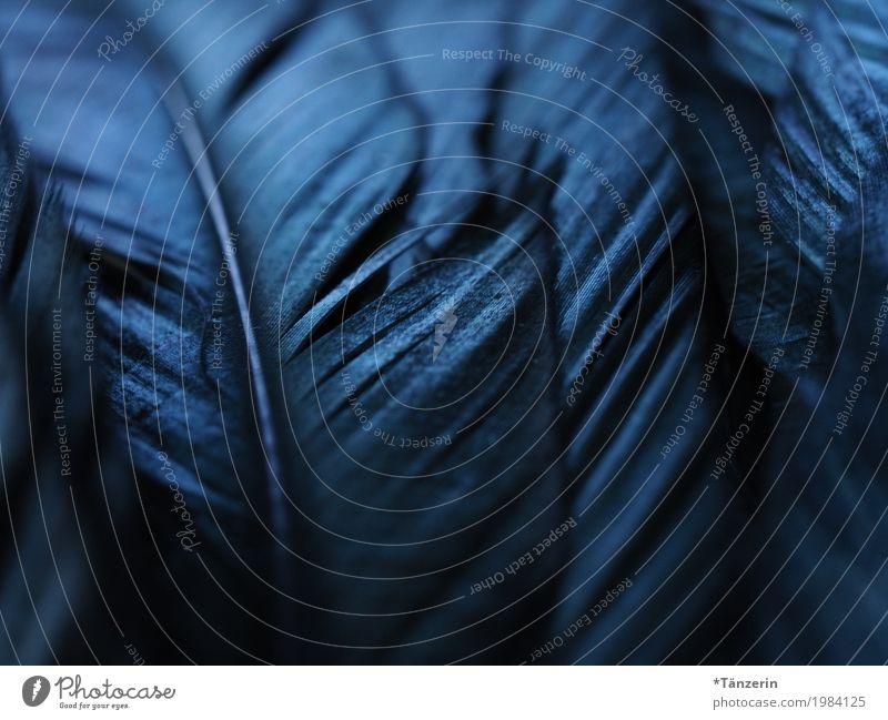 shades of black blau schön Tier ruhig schwarz Vogel ästhetisch Feder Flügel einzigartig Romantik silber