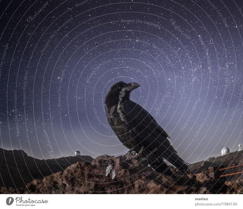 Nachtwächter Himmel blau Landschaft weiß Tier dunkel Frühling grau Vogel braun Felsen Horizont Stern Gipfel Wolkenloser Himmel Tiergesicht