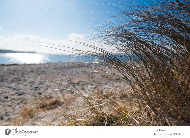 Strand bei Laboe / Kiel Himmel Natur Ferien & Urlaub & Reisen Pflanze blau Sommer Wasser Sonne Landschaft Meer Ferne Umwelt natürlich Freiheit Tourismus