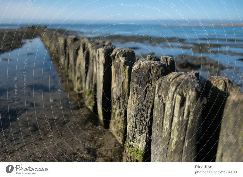Buhnen bei Laboe / Kiel Natur Ferien & Urlaub & Reisen blau Sommer Wasser Landschaft Meer Ferne Strand Umwelt Küste Holz Tourismus Kraft Sicherheit Schutz