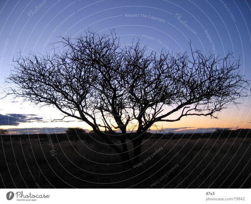 Baum am Abend Bauernhof Südafrika