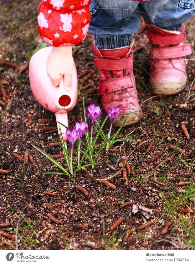 Blumen gießen Ostern Kind Gießkanne Mensch Kleinkind Mädchen Arme Hand Fuß Umwelt Natur Pflanze Frühling Krokusse Spielen Abenteuer Freude Garten Gartenarbeit