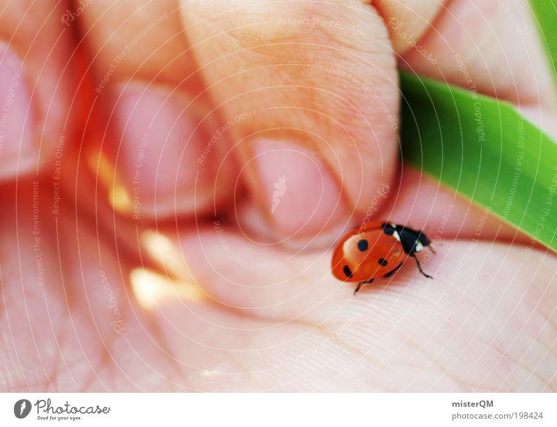 Little Things. Hand schön ruhig Tier Leben Glück klein Zufriedenheit ästhetisch Hoffnung zart Frieden berühren entdecken Momentaufnahme Leichtigkeit
