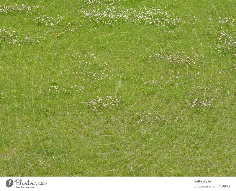 Ascheberg-Rasen120820031 grün Pflanze Wiese