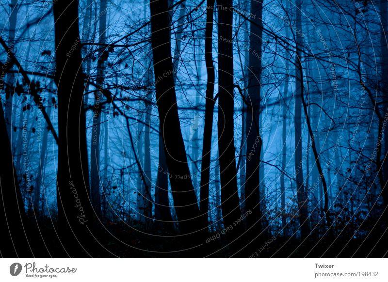 Unheimlicher Wald Natur Landschaft Nebel Holz Angst Entsetzen Todesangst dunkel Verfolgung Geister u. Gespenster Farbfoto Außenaufnahme Textfreiraum unten