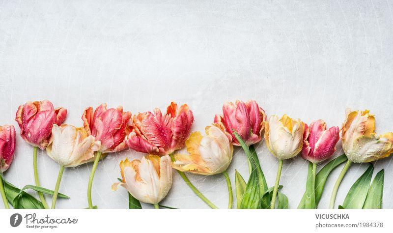 Schöne Tulpen mit Wassertropfen Stil Design Feste & Feiern Muttertag Ostern Natur Pflanze Frühling Blume Dekoration & Verzierung Blumenstrauß Blühend Liebe rosa