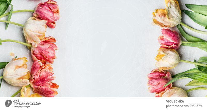 Bunte Tulpen in Pastelfarben Natur Pflanze Blume Liebe Hintergrundbild Stil Garten Feste & Feiern Design rosa Dekoration & Verzierung Geburtstag Blühend