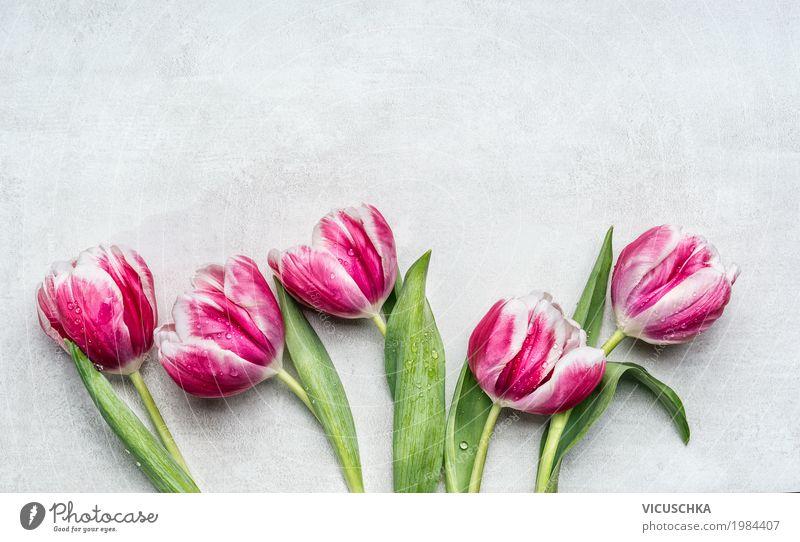 Schöne rosa weiße Tulpen Stil Design Feste & Feiern Valentinstag Muttertag Geburtstag Pflanze Frühling Blume Garten Dekoration & Verzierung Blumenstrauß Blühend