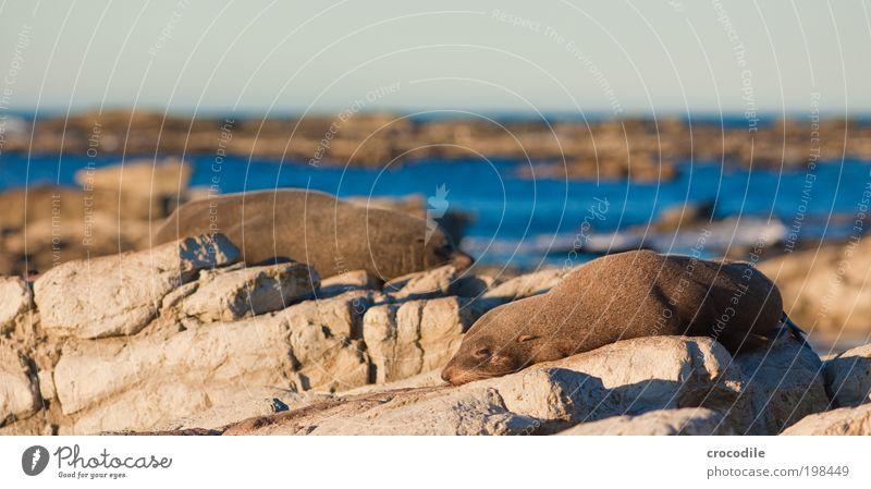 New Zealand XXXVII Umwelt Natur Landschaft Urelemente Wasser Himmel Sonne Schönes Wetter Wärme Felsen Wellen Küste Strand Tier Wildtier Robbenkolonie 2