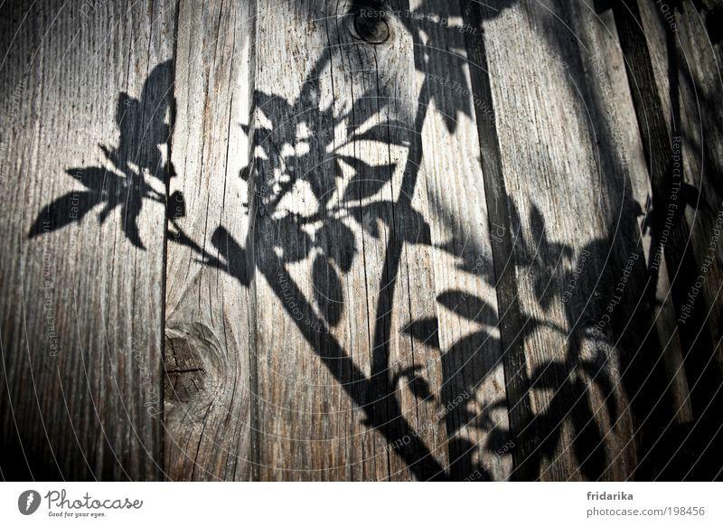 schattenspiele Pflanze Sommer schwarz ruhig Wiese Wand Graffiti grau Frühling Mauer träumen Fassade wild ästhetisch Dekoration & Verzierung Sträucher