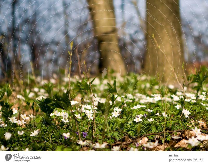 fruchtbarer Waldboden weiß grün Baum Pflanze Sommer Blume Wald Umwelt Gras Garten träumen Zeit Kraft Zufriedenheit warten laufen